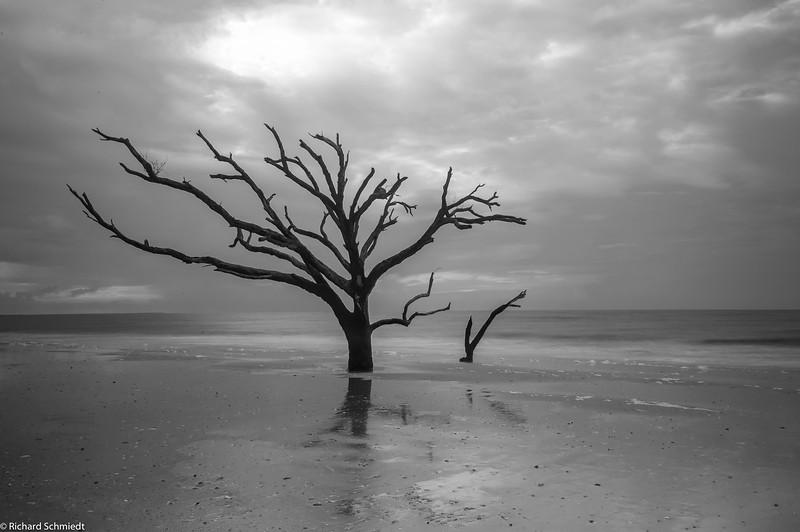 Botany Bay Edisto Island 2015-102