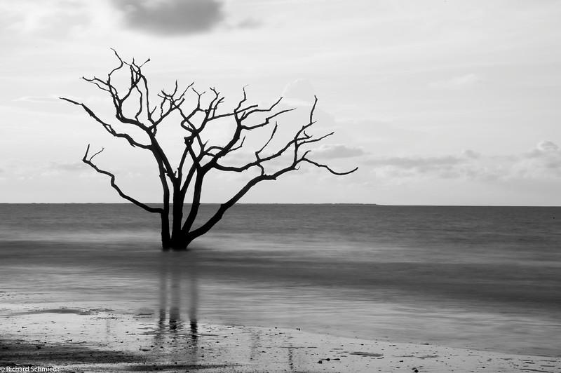 Botany Bay Edisto Island 2015-116