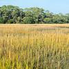 Botany Bay Edisto Island 2014-108