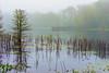 Foggy Morning On Creekfield Lake