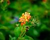 Green Flower Lover