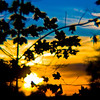 Title: Spilled Paint Sunset<br /> Date: November 2010<br /> A sunset in Cheverly. The lens used in this shot is a plastic Diana lens.