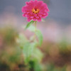 Title: Simple<br /> Date: November 2008<br /> A film shot of a flower with an extreme depth of field. Film used was Fujifilm 400 and taken with a Canon A-1.