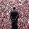 Title: Thoughts on Spring<br /> Date: March 2009<br /> A statue behind the Smithsonian Castle, with the Magnolia trees in full bloom.