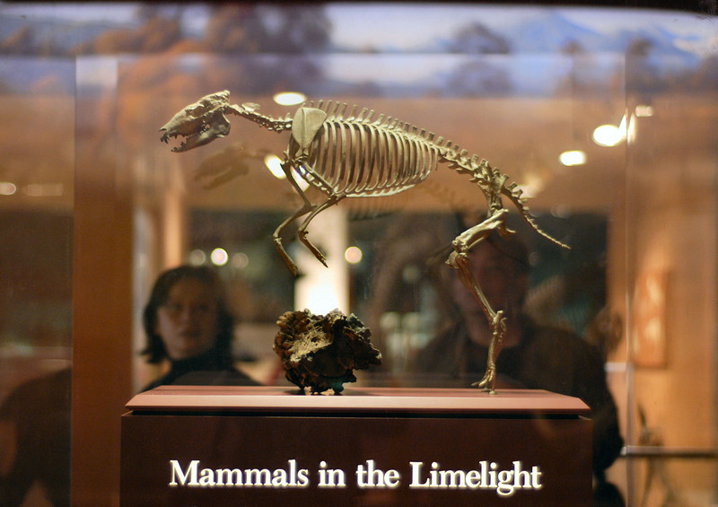 Title: Mammals in the Limelight<br /> Date: April 2008<br /> Tourists looking at a the remains of a prehistoric horse species; taken in the Smithsonian Natural History Museum.