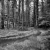 2012-10-06_HDR-Wicklow-2448-Edit