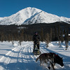 Dogsledding at Iniakuk Lodge