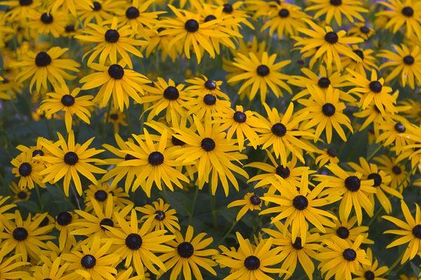 color flower2