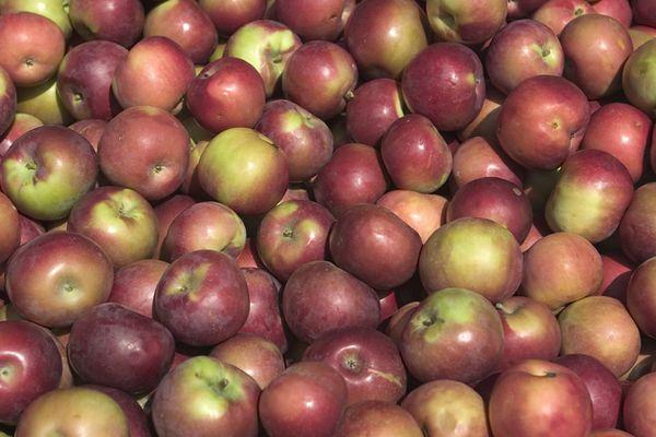 Apples Lesson1