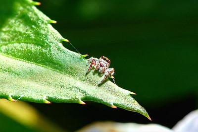 Bug 2010