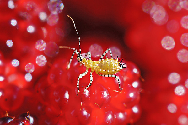 Bug macros, summer 2009