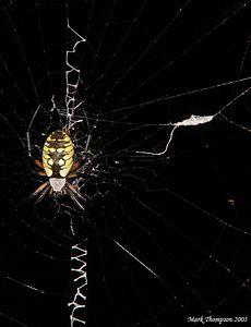 Garden Spider, Sony DSC-F717.