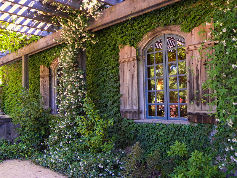 Windows Through the Ivy