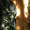 Ivy warmth