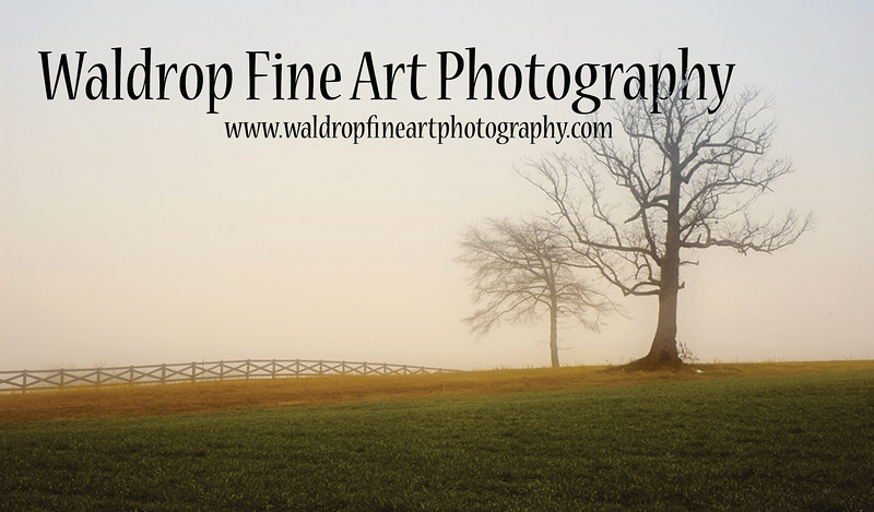 David Waldrop Photography