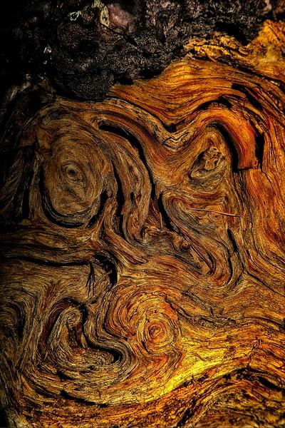 Tree form. Lassen Volcanic National Park, California.<br /> Photo © Carl Clark