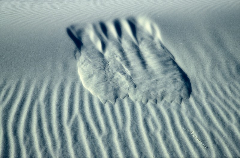 Gypsum forms. White Sands National Park, New Mexico.<br /> Photo © Carl Clark