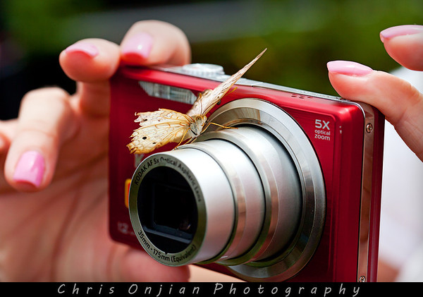 A little butterfly landed on my wife's camera as she was taking pictures...
