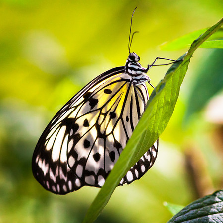 Butterfly Collection 11-14