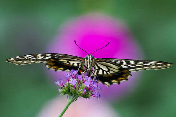 Butterfly Garden - Brookside