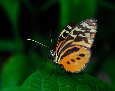 Butterfly Shoot