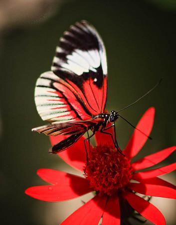 Butterfly World 1-11