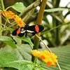 Butterfly World