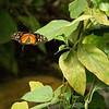 Butterfly World