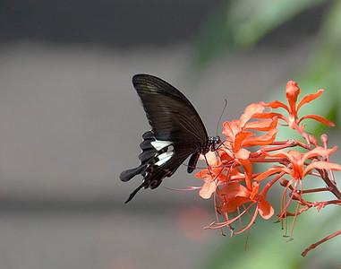 Butterfly shots