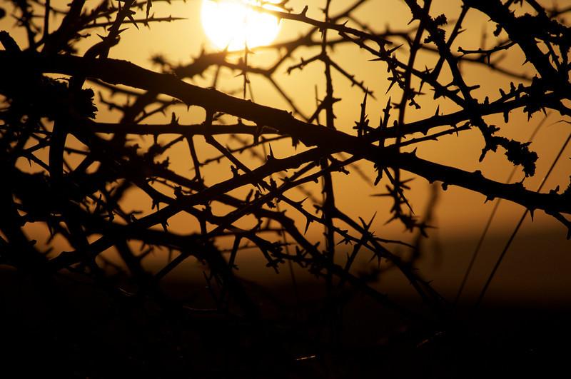 Sunset through a spiky bush