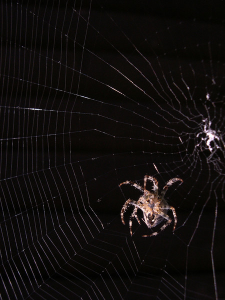 """I watched this little guy building his web for an hour this morning. I hate and love spiders. <a href=""""http://www.maconnection.co.uk"""" rel=""""nofollow"""">www.maconnection.co.uk</a>"""