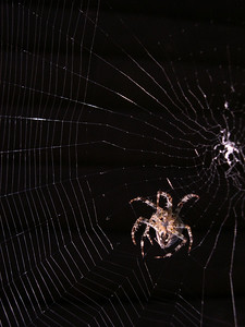 I watched this little guy building his web for an hour this morning. I hate and love spiders. www.maconnection.co.uk