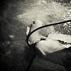 david sutta photography - shark special photos-114
