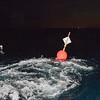 david sutta photography - shark special photos-107