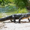 Everglades Alligator Farm -115