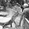 Everglades Alligator Farm -117