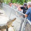 Everglades Alligator Farm -118