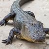 Everglades Alligator Farm -119