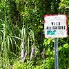 Everglades Alligator Farm -101