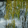 Canal Willow - no Polariser