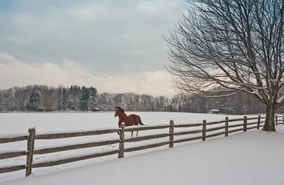 Ohio Christmas-7598
