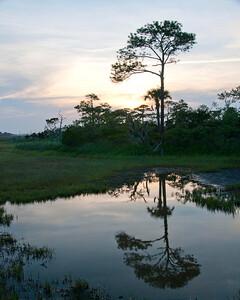 Evening on the marsh-9067 copy