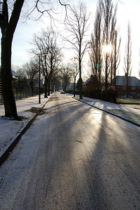 Icy Lamb Gardens