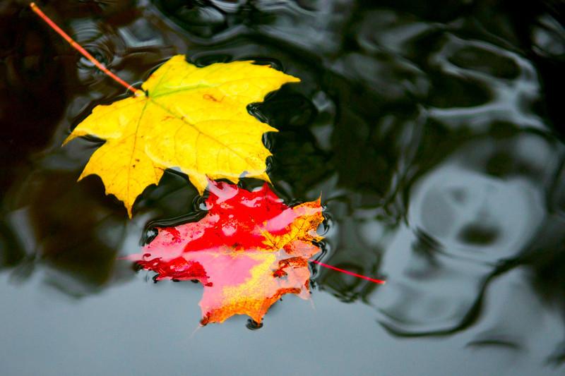 <h4>Autumn</h4>Ontario, Canada