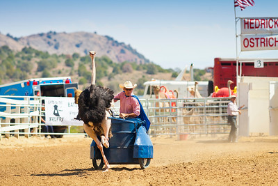 2013 Virginia City Camel Races 01