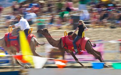 2013 Virginia City Camel Races 09