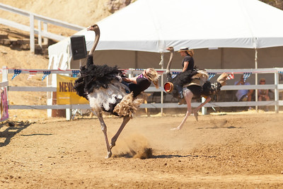 2013 Virginia City Camel Races 05