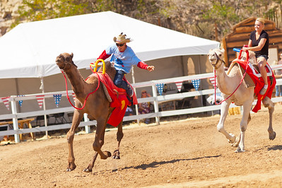 2013 Virginia City Camel Races 07