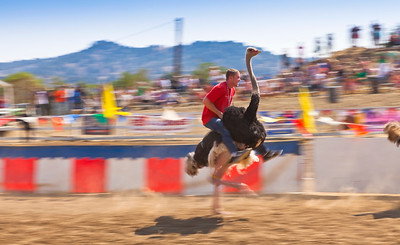 2013 Virginia City Camel Races 02