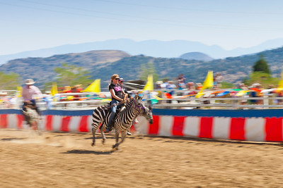 2013 Virginia City Camel Races 06